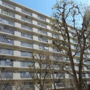 全号棟446戸のビックコミュニティ 内装リフォーム 15畳の広々リビングルーム 最寄り駅徒歩10分以内の物件です(外観)